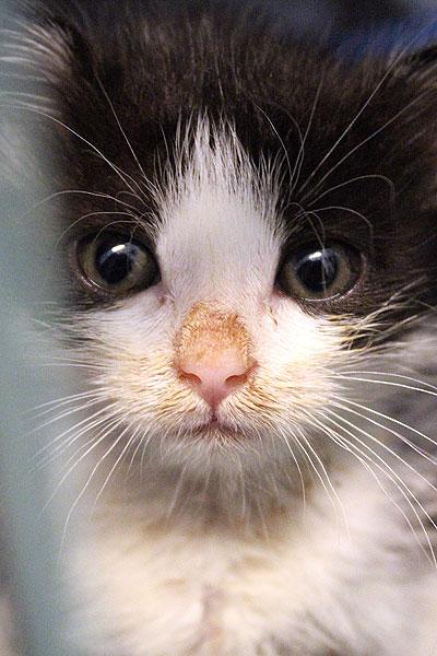 gatto-neurologia